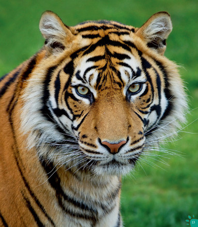 100种本领非凡的动物 动物中的狩猎大王