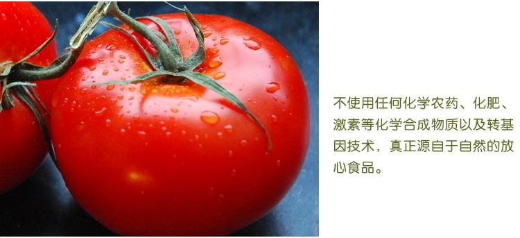 食全食美有机番茄400g/盒产地