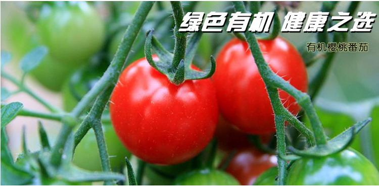 食全食美有机樱桃番茄270g/盒好吗