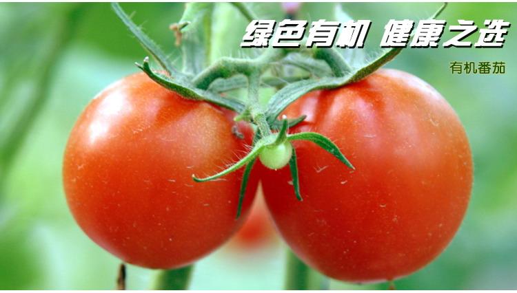 食全食美有机番茄400g/盒新品