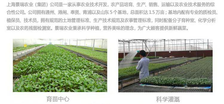 瑞鲜生杏鲍菇250g/盒图片