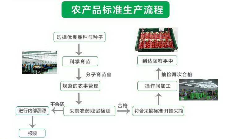 瑞鲜生杏鲍菇250g/盒产地