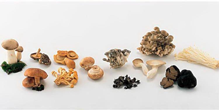 瑞鲜生菌菇四合一200g/盒购买心得