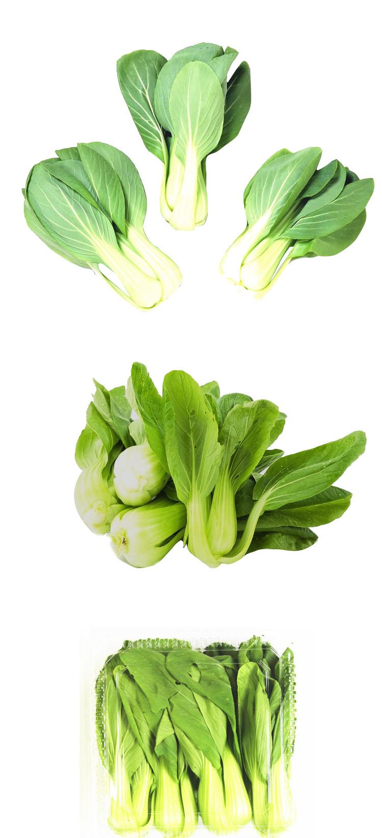 食全食美有机小青菜300g/盒低价