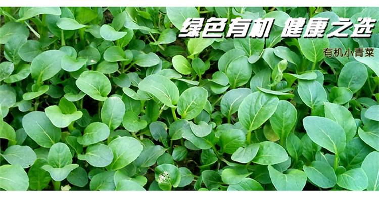 食全食美有机小青菜300g/盒评价