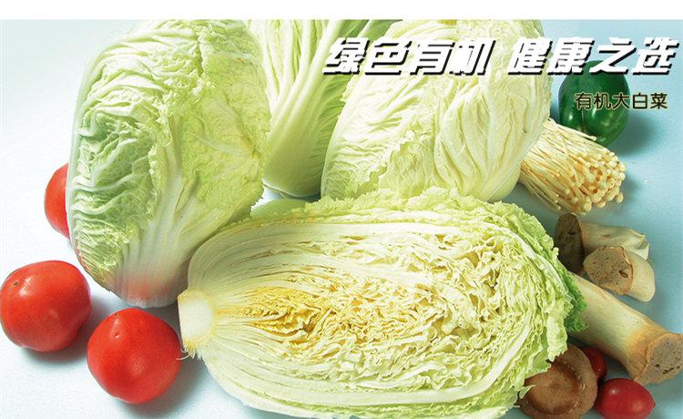 食全食美有机大白菜1000g/颗新品
