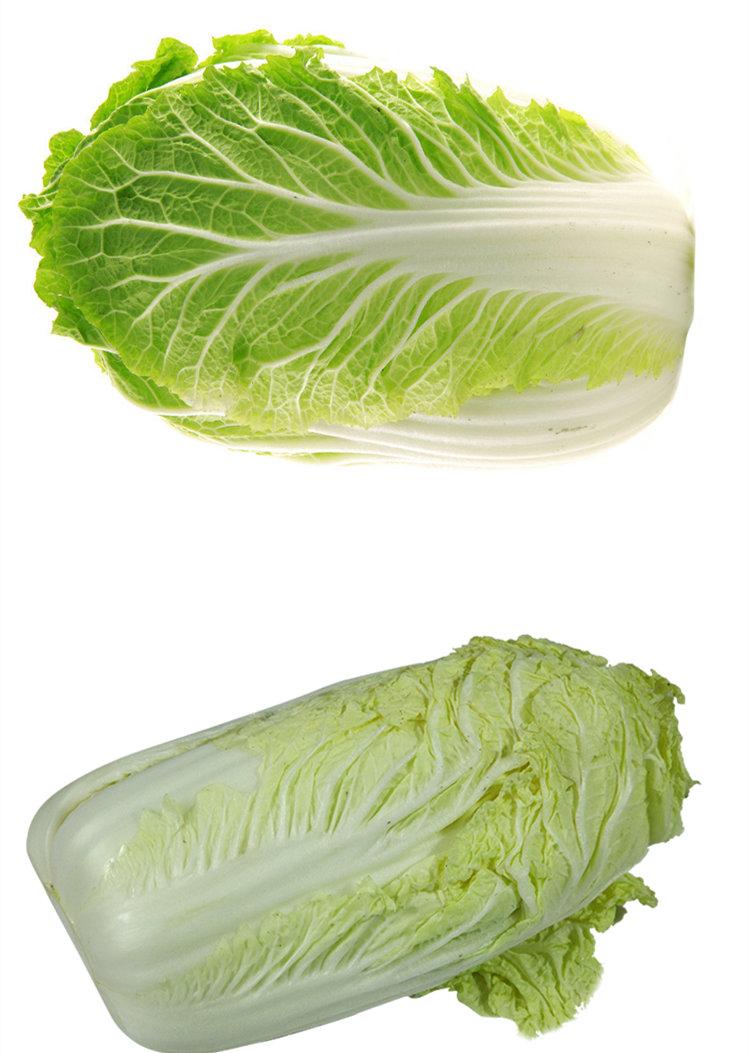 食全食美有机大白菜1000g/颗产地